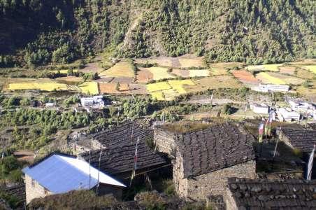Farming near Annapurna