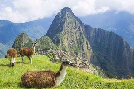 Three llamas at Machu Picchu