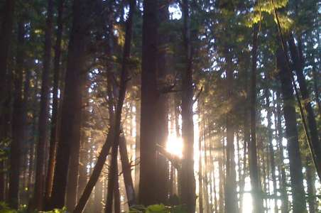 A forest near Olympus in the Olympic Mountains
