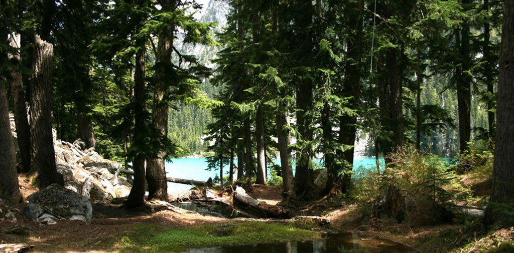 A forest campsite in the Cascades
