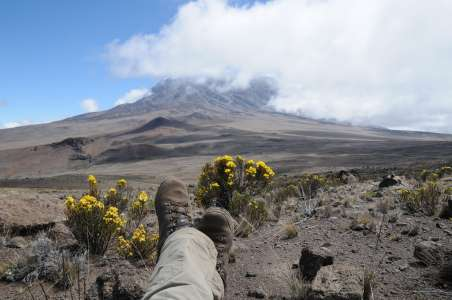 Looking up at Kilimanjaro