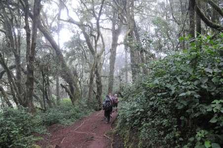 Hiking on Mount Kilimanjaro. Savanna in Amboseli, Kenya