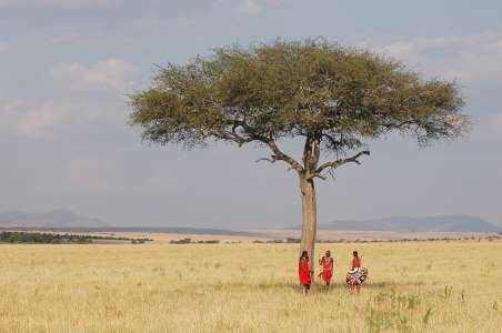 Masai people in traditional costumes walking in the savannah