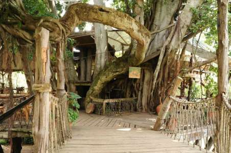 The Trout Tree Restaurant built in an enormous Fig Tree