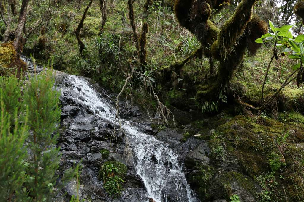 Water stream on Machame route (Day 1)