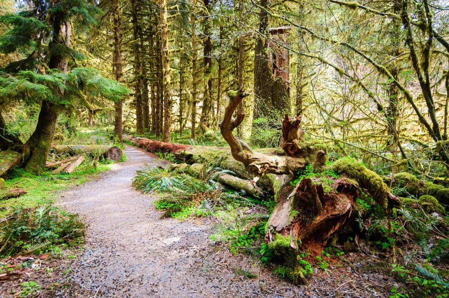 ONP_Trail