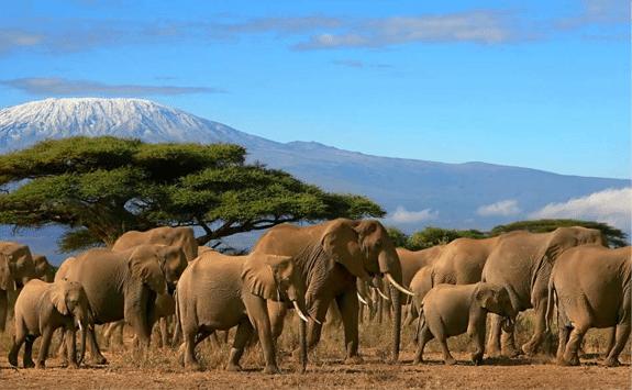 mt-kilimanjaro-marangu